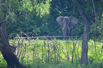 Elephant at Chisanse Beach