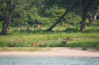 Puku on Chisanse beach