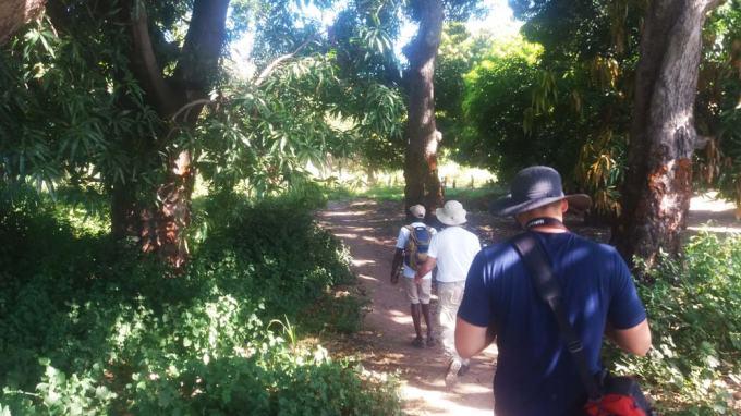 mangoTrees